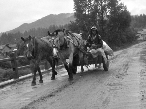 Horse and cart triad in the rain