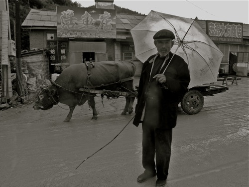 Bovine cart in a little village