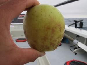 My favourite apple ever
