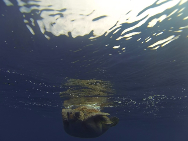 A wave surfed the turtle in towards the boat allowing this shot