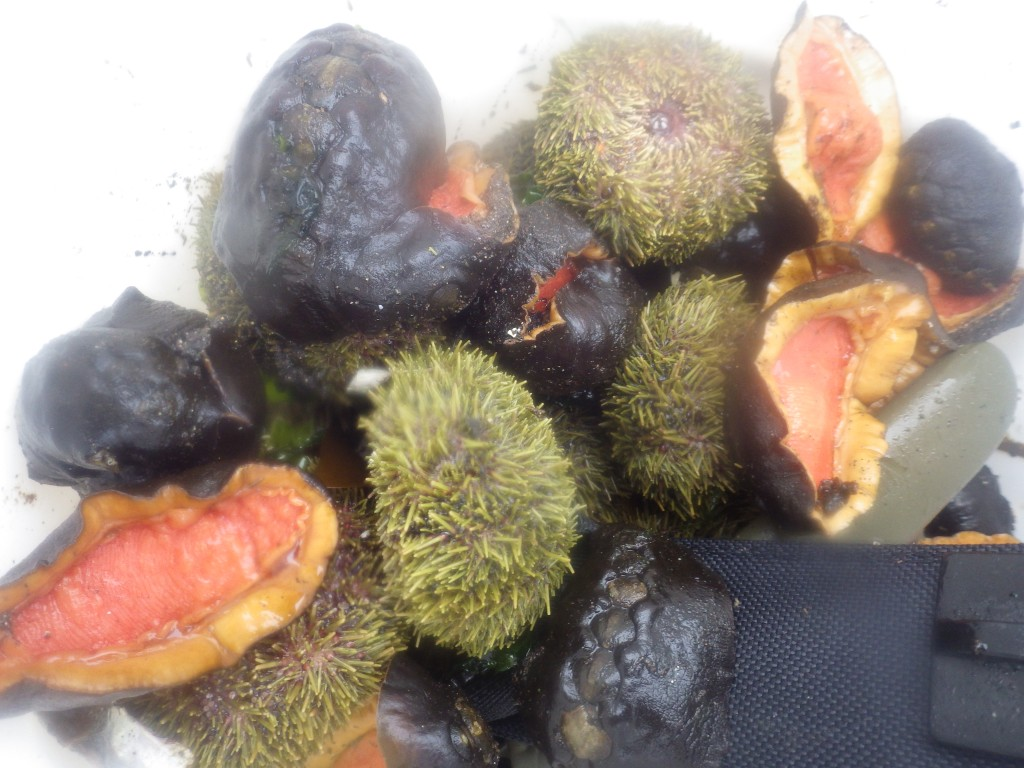 Sea urchins and badarki - great protein and vitamins