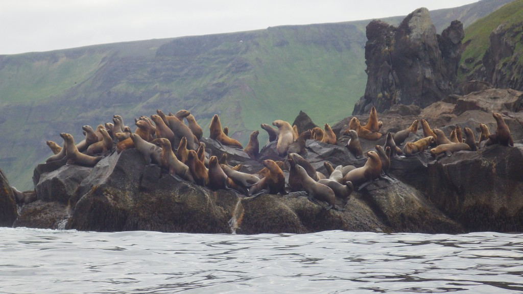 Sea lions at a rock concert