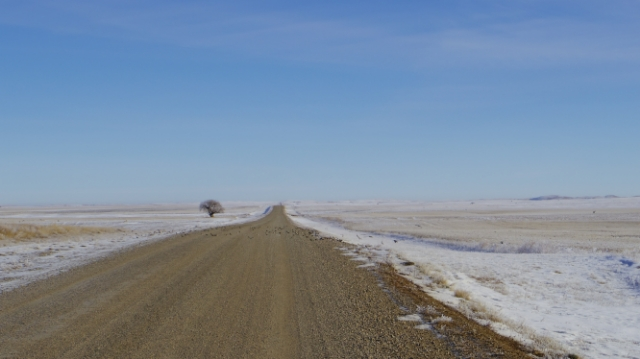 There are more cows and people than trees in the Prairies (definitely)