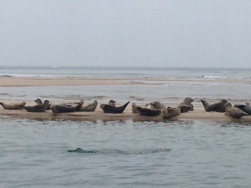 Lucky seals. I hope they wave at her.
