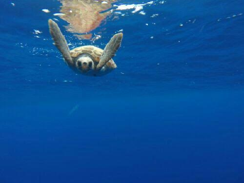 Me: 'What do you want to be when you grow up?' Sea turtle: 'A skydiver. Look, I practice all the time.'