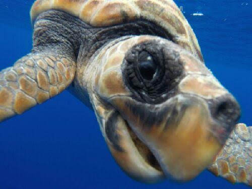Ever wondered what it would be like to be kissed by a sea turtle? My camera found out. Horny, apparently.